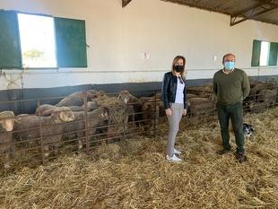 La Diputación de Cáceres adjudica 184 ejemplares de Merino Precoz a 29 ganaderos de la provincia