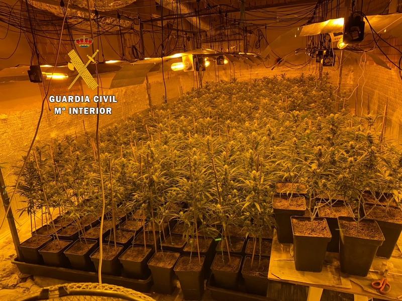 La Guardia Civil detiene a dos personas por cultivar marihuana en Madroñera e incauta cerca de 400 plantas