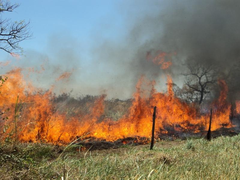 Extremadura sufre 15 incendios en la última semana, 9 de ellos en la provincia de Cáceres