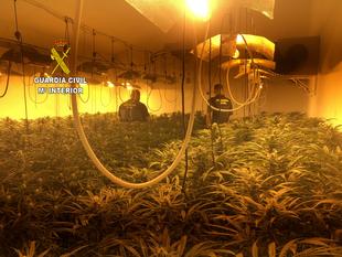 La Guardia Civil descubre en dos viviendas de Casar de Miajadas 917 plantas de cannabis y detiene a cuatro personas