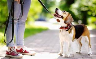 El censo de perros en Cáceres, con 31.286 canes, supone casi un tercio de la población de la ciudad, que cuenta con 96.117 habitantes